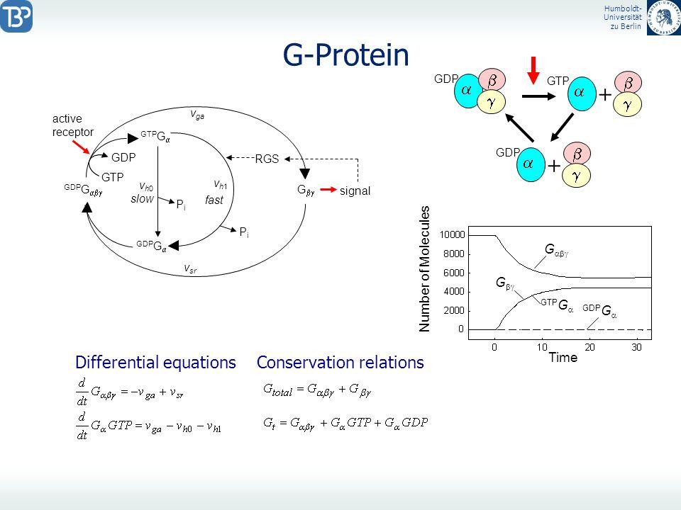 Humboldt- Universität zu Berlin G-Protein GDP G GTP G GDP G GDP active receptor PiPi signal G PiPi slow fast RGS GTP v ga vh1vh1 vh0vh0 v sr Time G Nu