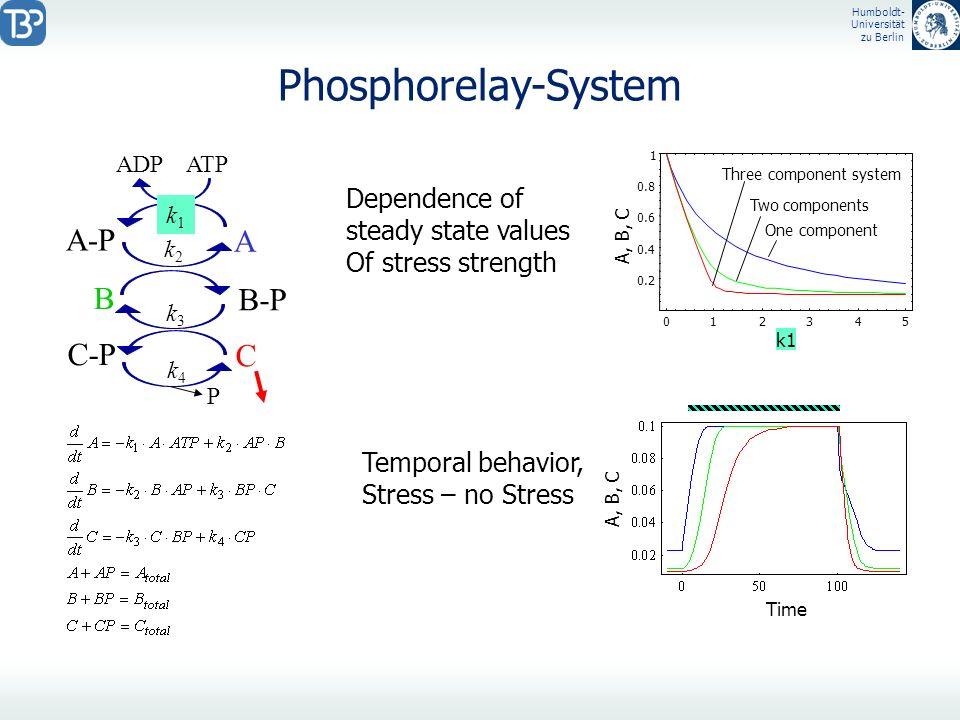 Humboldt- Universität zu Berlin Phosphorelay-System 012345 k1 0.2 0.4 0.6 0.8 1 A, B, C A-P A ADP ATP B B-P C-P C P k1k1 k2k2 k3k3 k4k4 Three componen