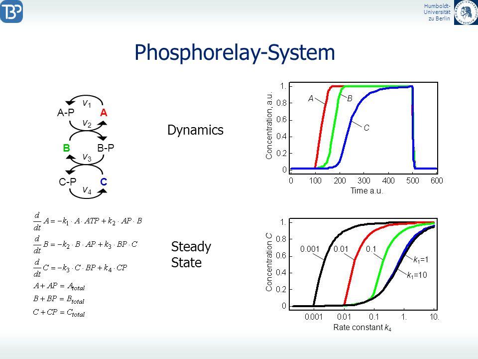 Humboldt- Universität zu Berlin Phosphorelay-System B C-P B-P C v3v3 v4v4 A-P A v2v2 v1v1 Concentration C Concentration, a.u. Rate constant k 4 Time a