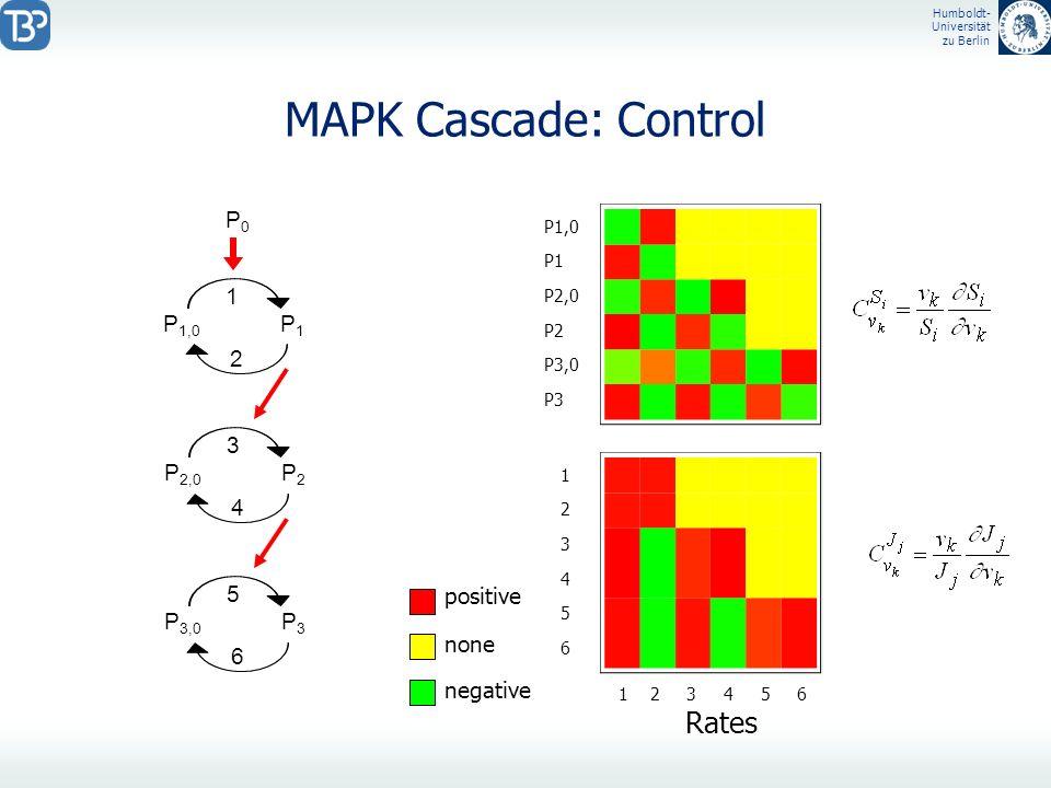 Humboldt- Universität zu Berlin MAPK Cascade: Control P 1,0 P1P1 1 2 P0P0 P 2,0 P2P2 3 4 P 3,0 P3P3 5 6 1 2 3 4 5 6 Rates P1,0 P1 P2,0 P2 P3,0 P3 1234