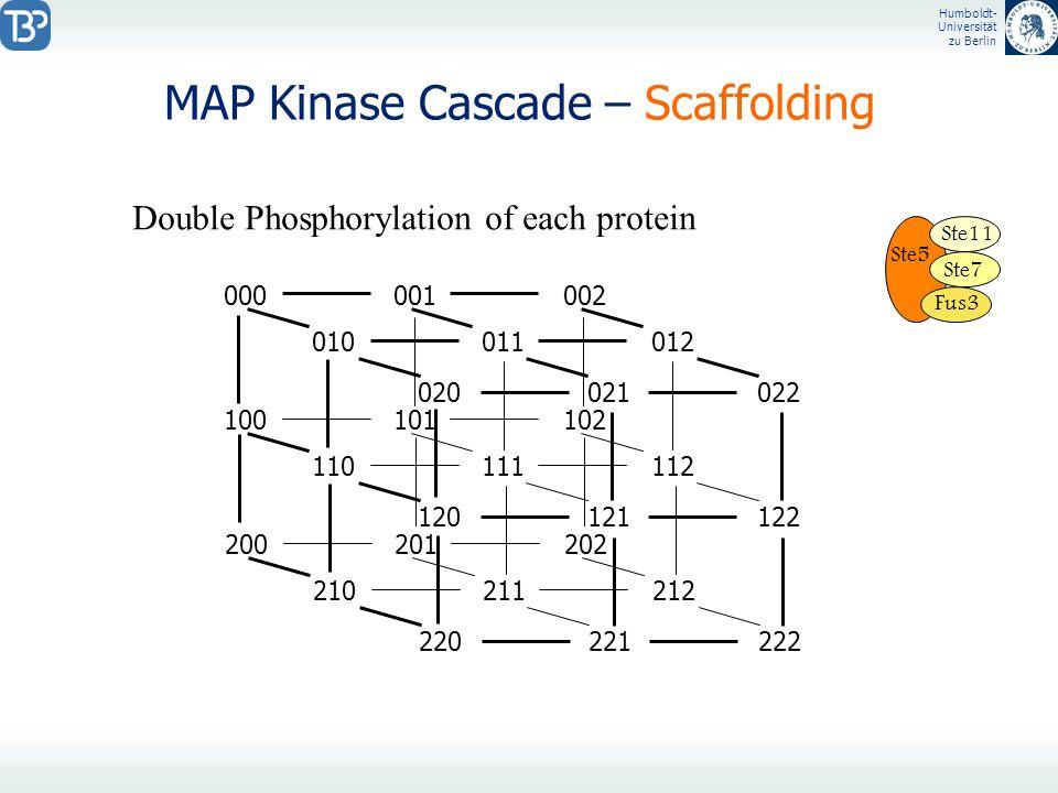 Humboldt- Universität zu Berlin MAP Kinase Cascade – Scaffolding Ste5 Ste11 Ste7 Fus3 Double Phosphorylation of each protein 000001002 010011012 02002