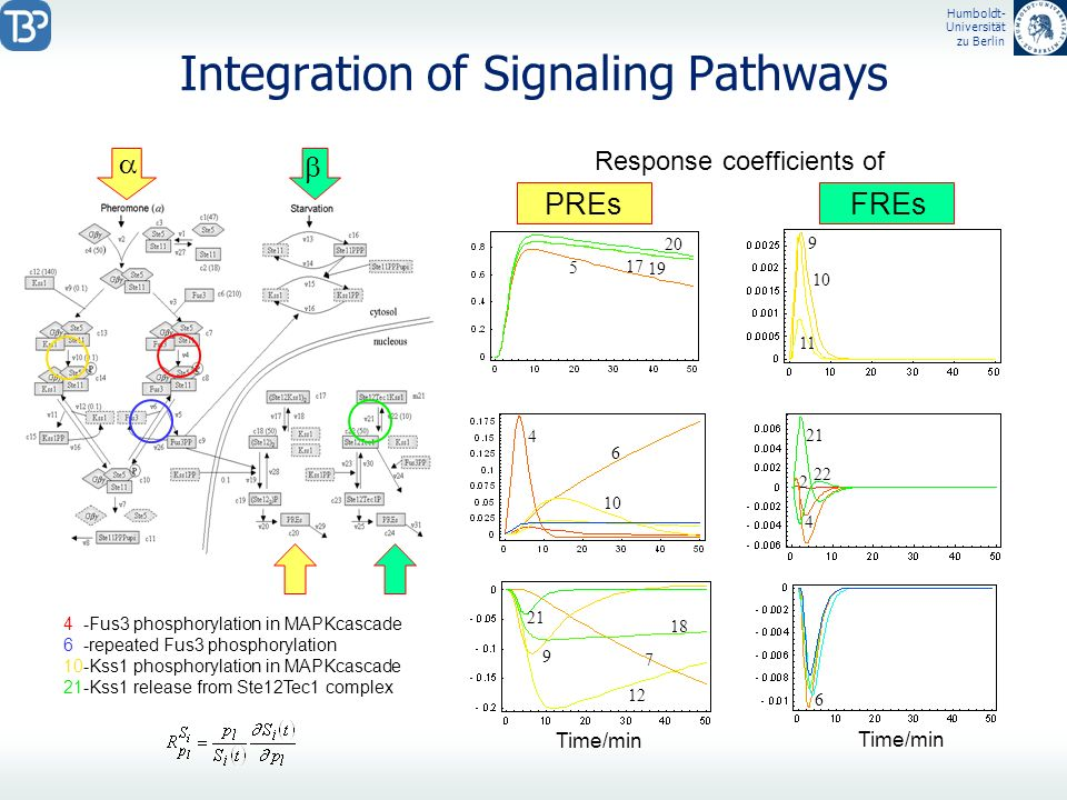 Humboldt- Universität zu Berlin Integration of Signaling Pathways 5 7 9 11 12 17 18 19 20 21 5 9 10 11 4 -Fus3 phosphorylation in MAPKcascade 6 -repea