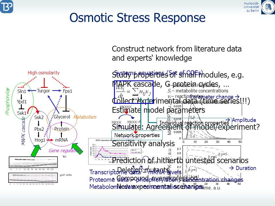 Humboldt- Universität zu Berlin Osmotic Stress Response Ypd1 High osmolarity Ssk1 Sln1 Ssk2 Pbs2 Hog1 mRNA Protein Glycerol Turgor Fps1 Construct netw