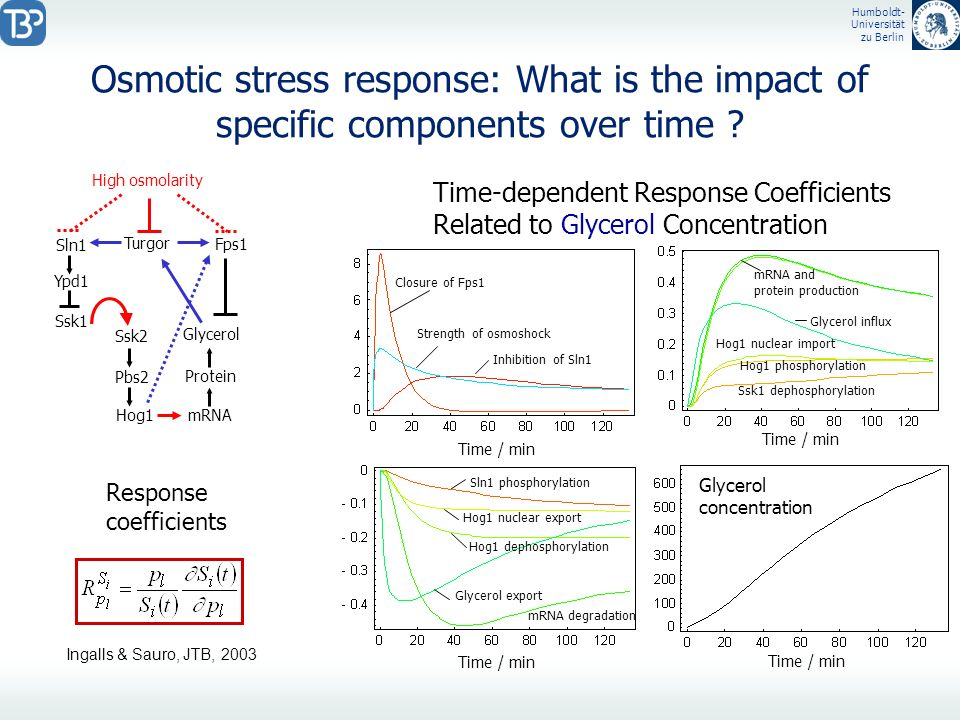 Humboldt- Universität zu Berlin Osmotic stress response: What is the impact of specific components over time ? Ypd1 High osmolarity Ssk1 Sln1 Ssk2 Pbs