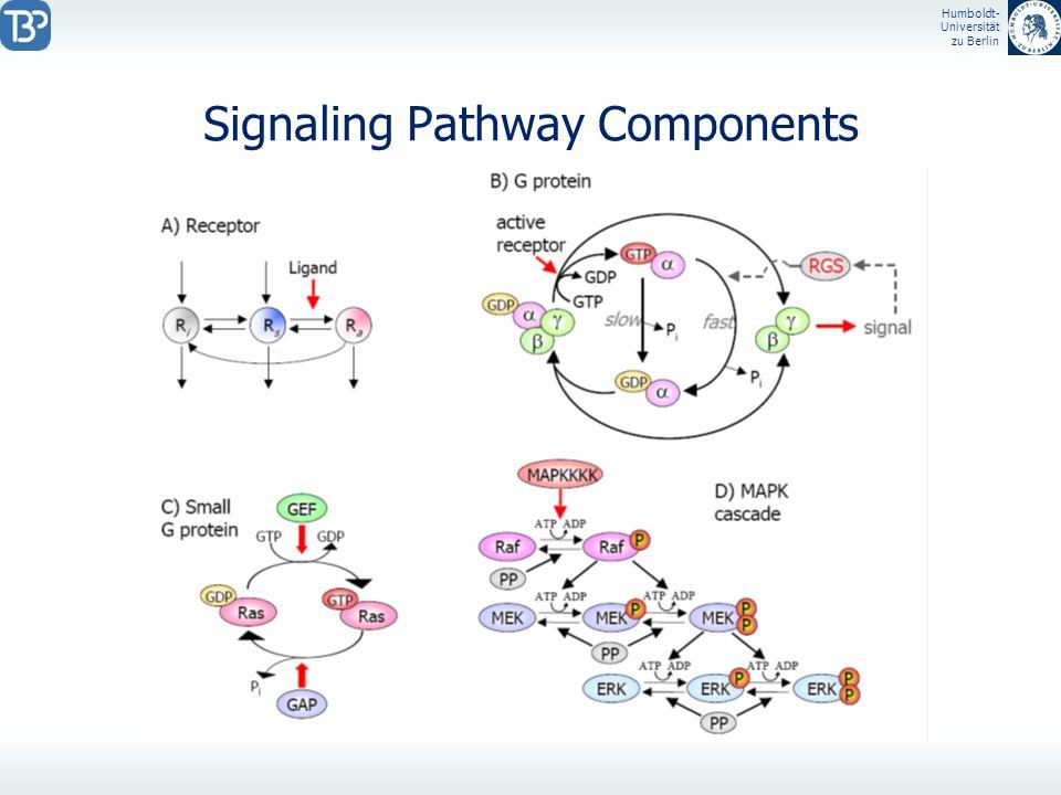Humboldt- Universität zu Berlin Signaling Pathway Components