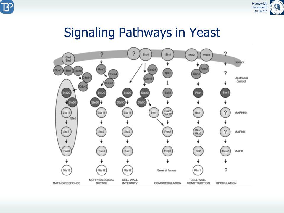Humboldt- Universität zu Berlin Signaling Pathways in Yeast