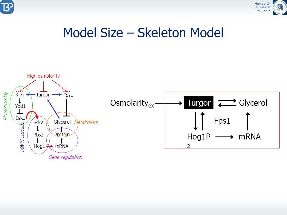 Humboldt- Universität zu Berlin Model Size – Skeleton Model Ypd1 High osmolarity Ssk1 Sln1 Ssk2 Pbs2 Hog1 mRNA Protein Glycerol Turgor Fps1 MAPK casca