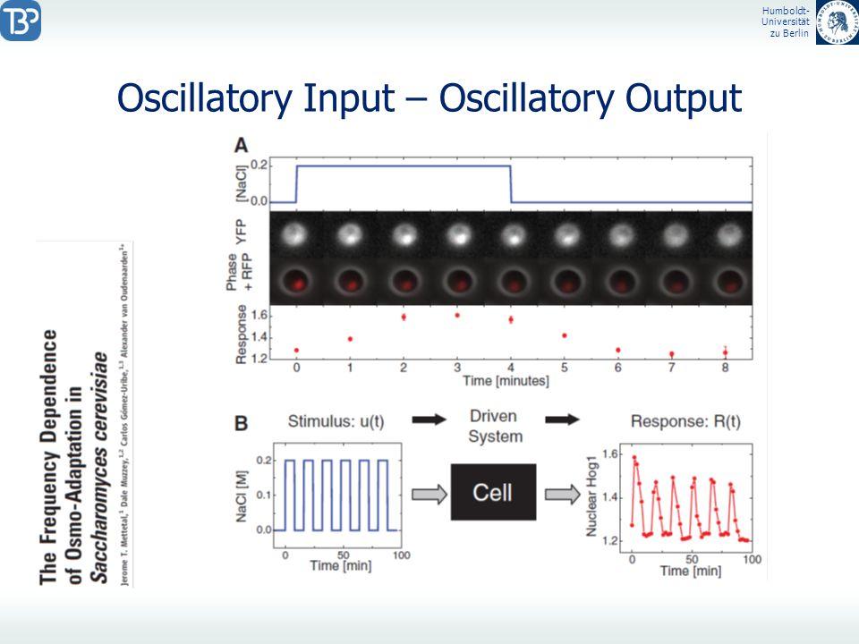 Humboldt- Universität zu Berlin Oscillatory Input – Oscillatory Output