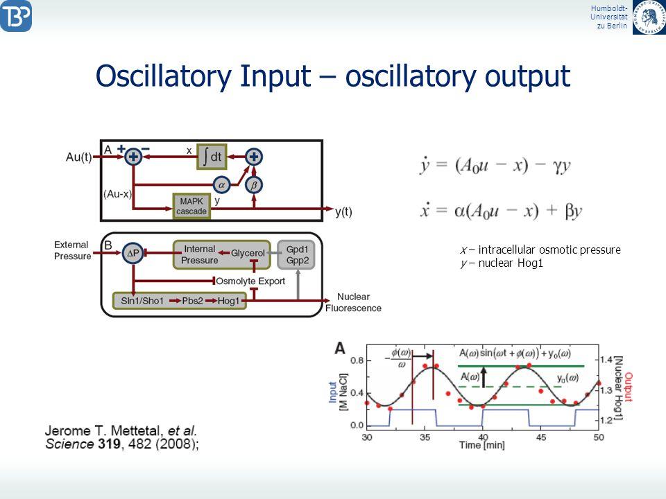 Humboldt- Universität zu Berlin Oscillatory Input – oscillatory output x – intracellular osmotic pressure y – nuclear Hog1