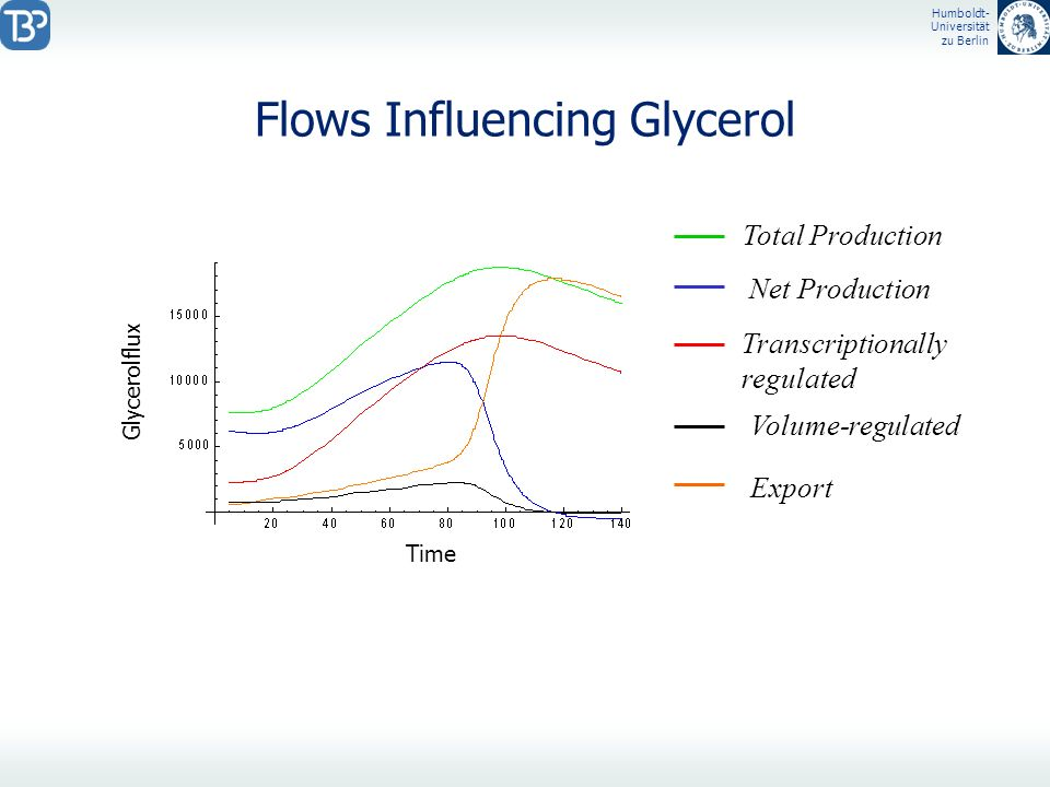 Humboldt- Universität zu Berlin Flows Influencing Glycerol Glycerolflux Time Total Production Transcriptionally regulated Export Volume-regulated Net