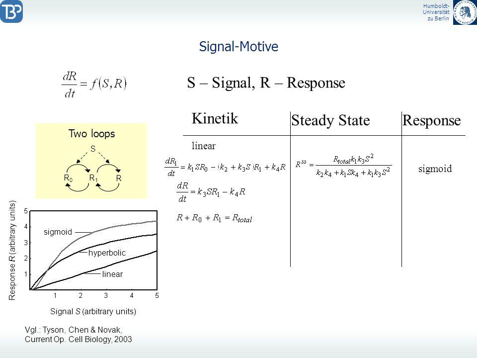 Humboldt- Universität zu Berlin Signal-Motive S – Signal, R – Response Kinetik linear Steady StateResponse Signal S (arbitrary units) Response R (arbi