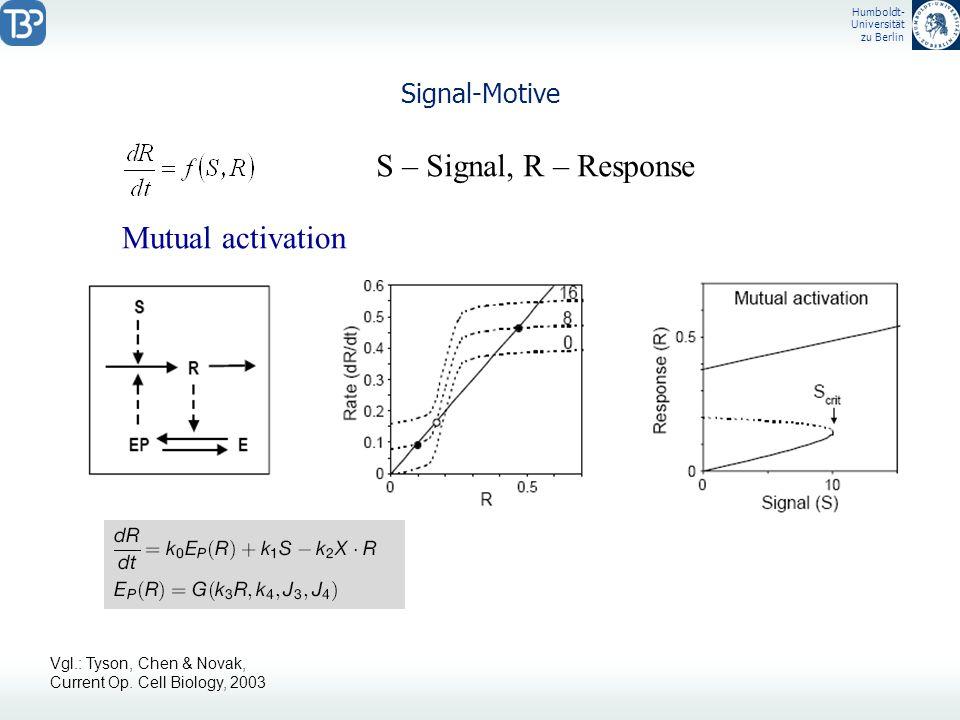 Humboldt- Universität zu Berlin Signal-Motive S – Signal, R – Response Mutual activation Vgl.: Tyson, Chen & Novak, Current Op. Cell Biology, 2003