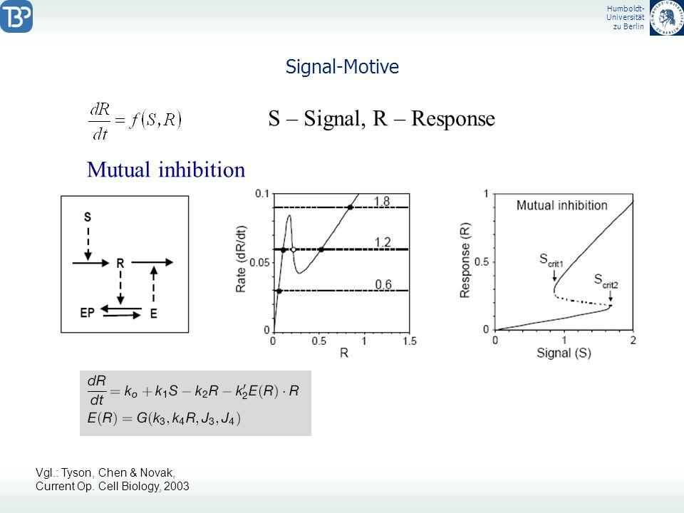 Humboldt- Universität zu Berlin Signal-Motive S – Signal, R – Response Mutual inhibition Vgl.: Tyson, Chen & Novak, Current Op. Cell Biology, 2003