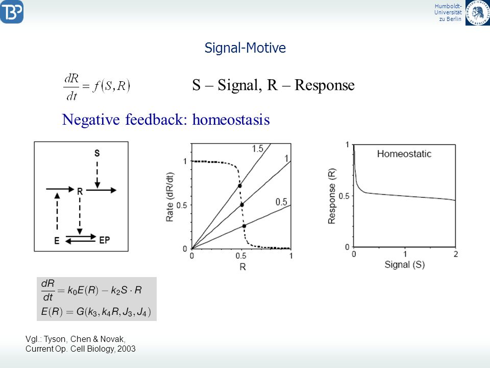 Humboldt- Universität zu Berlin Signal-Motive S – Signal, R – Response Negative feedback: homeostasis Vgl.: Tyson, Chen & Novak, Current Op. Cell Biol