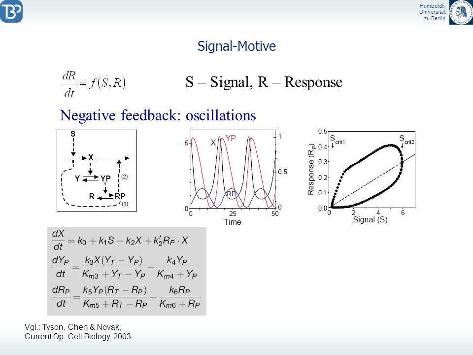 Humboldt- Universität zu Berlin Signal-Motive S – Signal, R – Response Negative feedback: oscillations Vgl.: Tyson, Chen & Novak, Current Op. Cell Bio