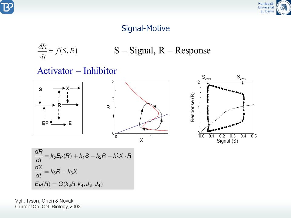 Humboldt- Universität zu Berlin Signal-Motive S – Signal, R – Response Activator – Inhibitor Vgl.: Tyson, Chen & Novak, Current Op. Cell Biology, 2003