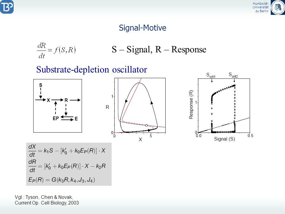 Humboldt- Universität zu Berlin Signal-Motive S – Signal, R – Response Substrate-depletion oscillator Vgl.: Tyson, Chen & Novak, Current Op. Cell Biol