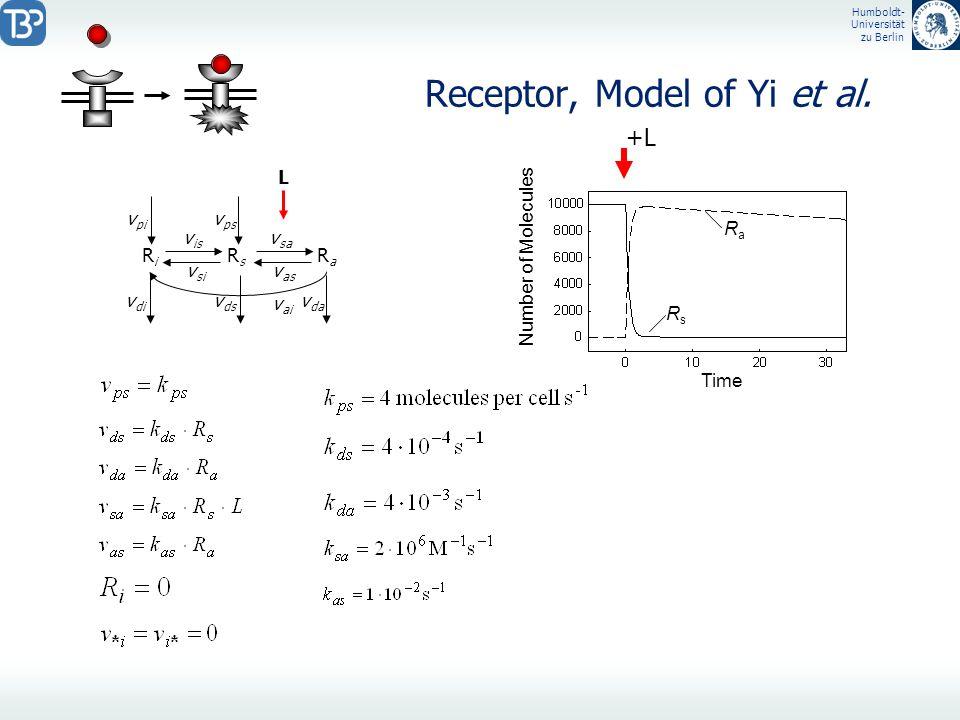Humboldt- Universität zu Berlin Receptor, Model of Yi et al. RiRi RsRs RaRa L visvis vsivsi vsavsa vasvas vpivpi v di v ai vpsvps v ds v da Time RsRs