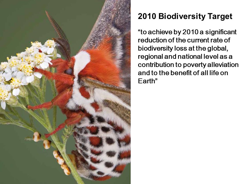 to achieve by 2010 a significant reduction of the current rate of biodiversity loss at the global, regional and national level as a contribution to po