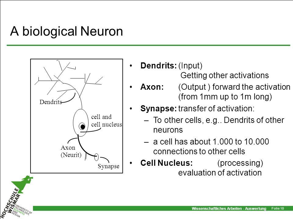Wissenschaftliches Arbeiten - Auswertung Folie 10 A biological Neuron cell and cell nucleus Axon (Neurit) Dendrits Synapse Dendrits:(Input) Getting ot