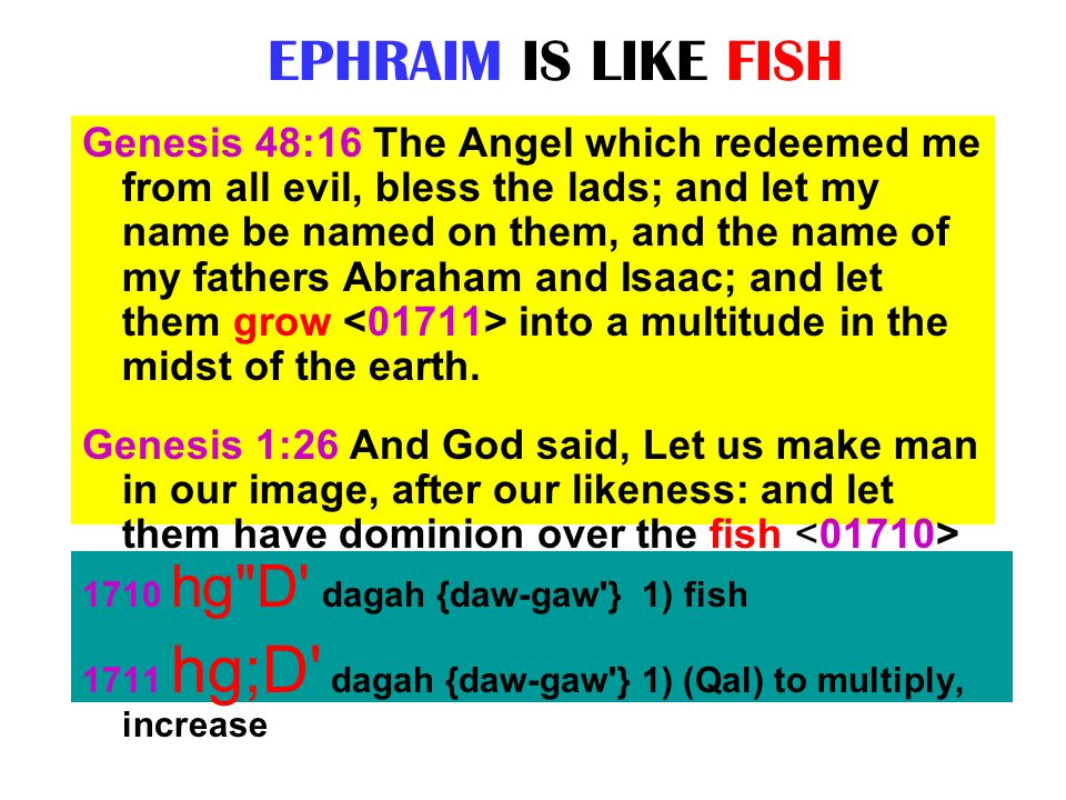 EPHRAIM IS LIKE FISH Genesis 48:16 The Angel which redeemed me from all evil, bless the lads; and let my name be named on them, and the name of my fat