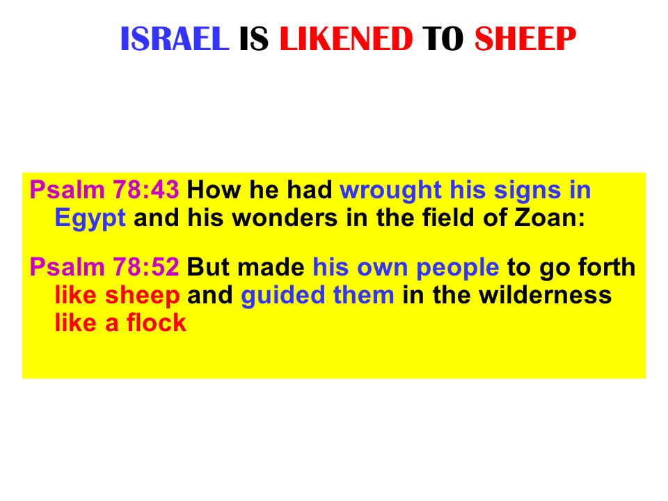 ISRAEL IS LIKENED TO SHEEP Psalm 78:43 How he had wrought his signs in Egypt and his wonders in the field of Zoan: Psalm 78:52 But made his own people