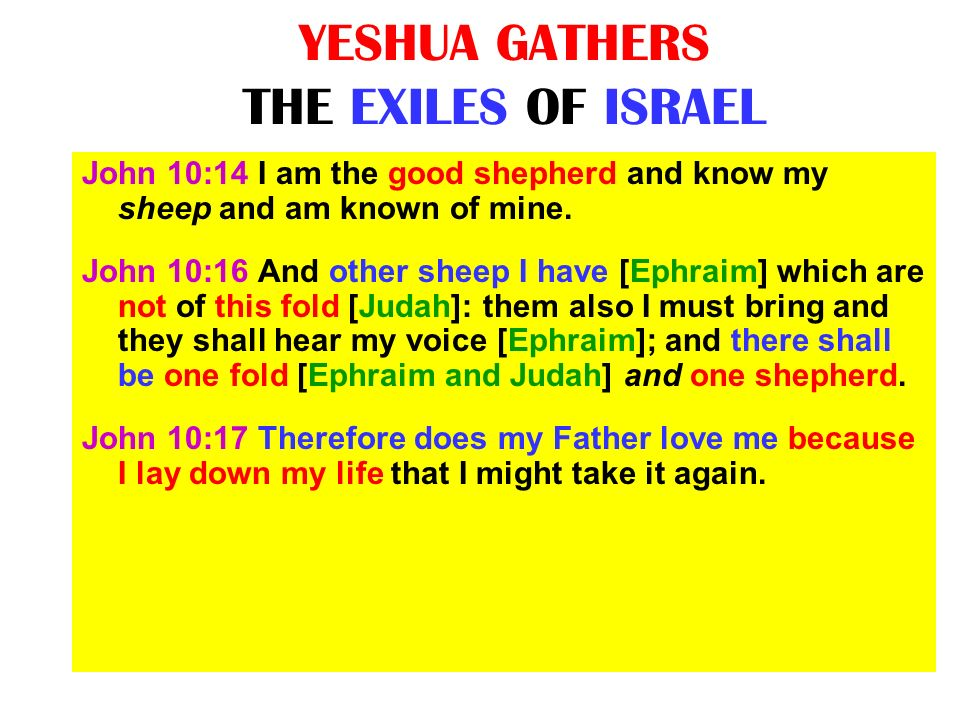 YESHUA GATHERS THE EXILES OF ISRAEL John 10:14 I am the good shepherd and know my sheep and am known of mine. John 10:16 And other sheep I have [Ephra