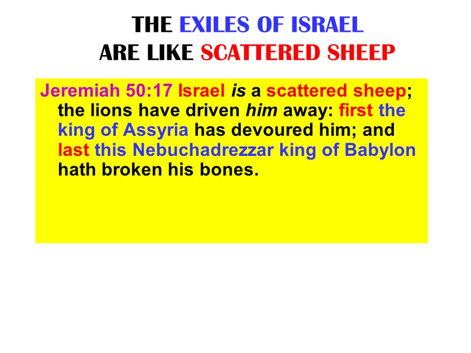 THE EXILES OF ISRAEL ARE LIKE SCATTERED SHEEP Jeremiah 50:17 Israel is a scattered sheep; the lions have driven him away: first the king of Assyria ha