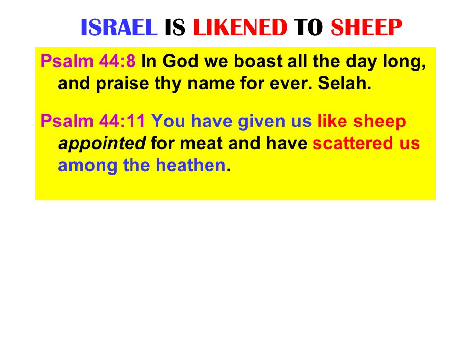 THE EXILES OF ISRAEL ARE LIKE SCATTERED SHEEP Jeremiah 50:17 Israel is a scattered sheep; the lions have driven him away: first the king of Assyria has devoured him; and last this Nebuchadrezzar king of Babylon hath broken his bones.