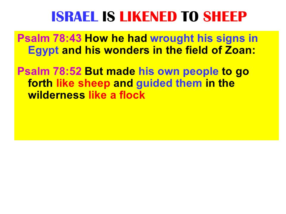 THE SCATTERED SHEEP HAVE NO SHEPHERD Ezekiel 34:1 And the word of the LORD came unto me, saying, Ezekiel 34:2 Son of man, prophesy against the shepherds of Israel, prophesy, and say unto them, Thus says the Lord GOD unto the shepherds; Woe be to the shepherds of Israel that do feed themselves.