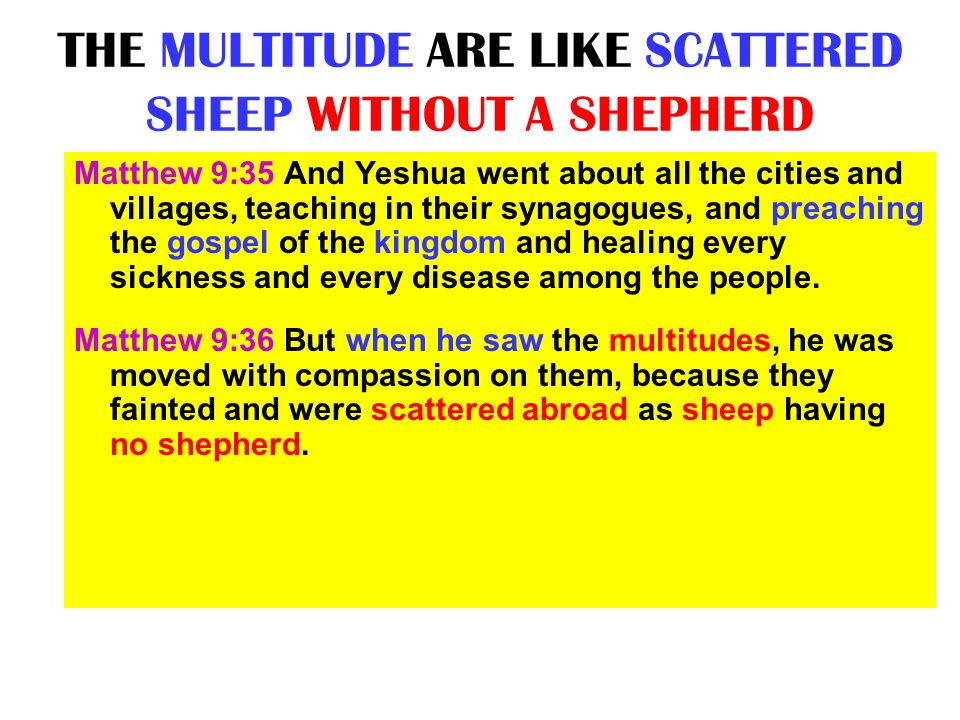 THE MULTITUDE ARE LIKE SCATTERED SHEEP WITHOUT A SHEPHERD Matthew 9:35 And Yeshua went about all the cities and villages, teaching in their synagogues