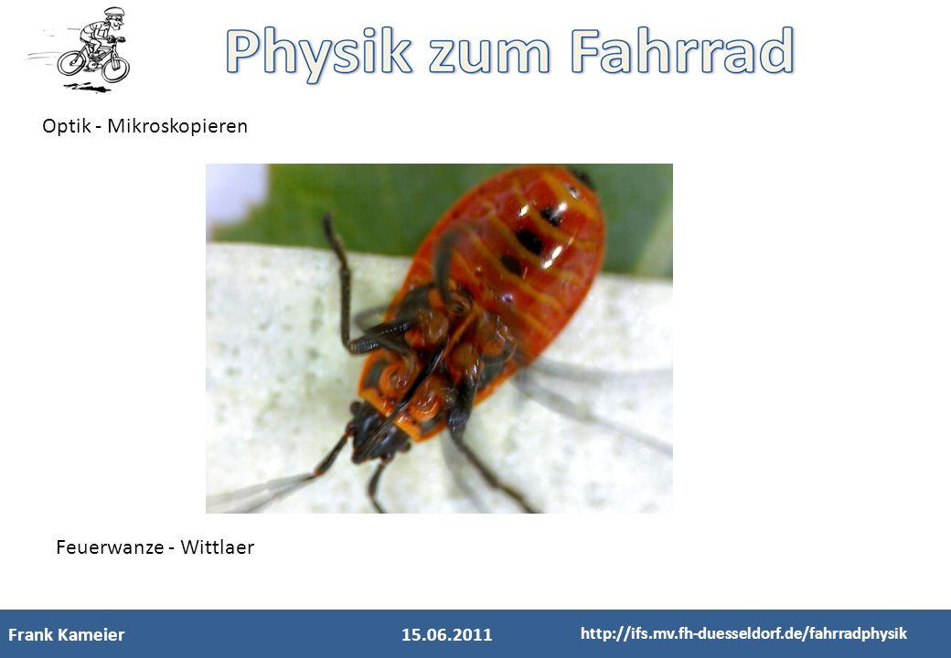 Frank Kameier15.06.2011 http://ifs.mv.fh-duesseldorf.de/fahrradphysik Optik - Mikroskopieren Feuerwanze - Wittlaer