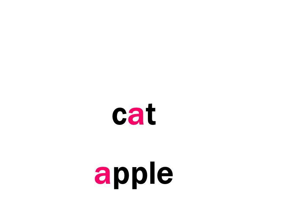 cat apple