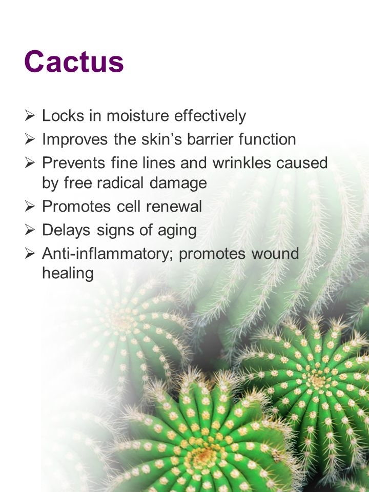 Cactus Locks in moisture effectively Improves the skins barrier function Prevents fine lines and wrinkles caused by free radical damage Promotes cell