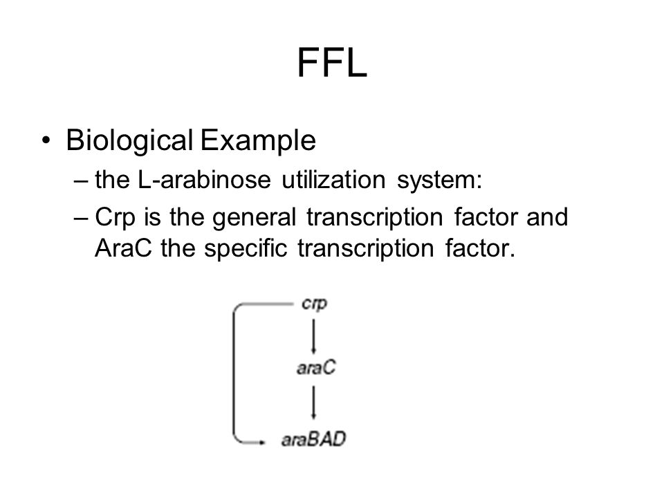 FFL Biological Example –the L-arabinose utilization system: –Crp is the general transcription factor and AraC the specific transcription factor.