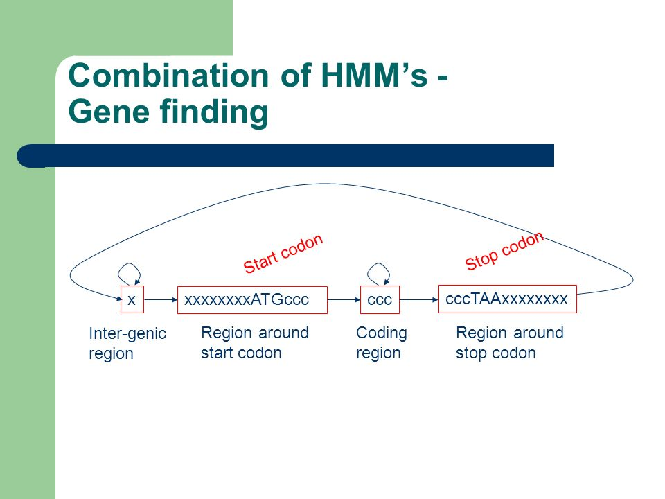 Combination of HMMs - Gene finding x ccc xxxxxxxxATGccc cccTAAxxxxxxxx Inter-genic region Region around start codon Coding region Region around stop c
