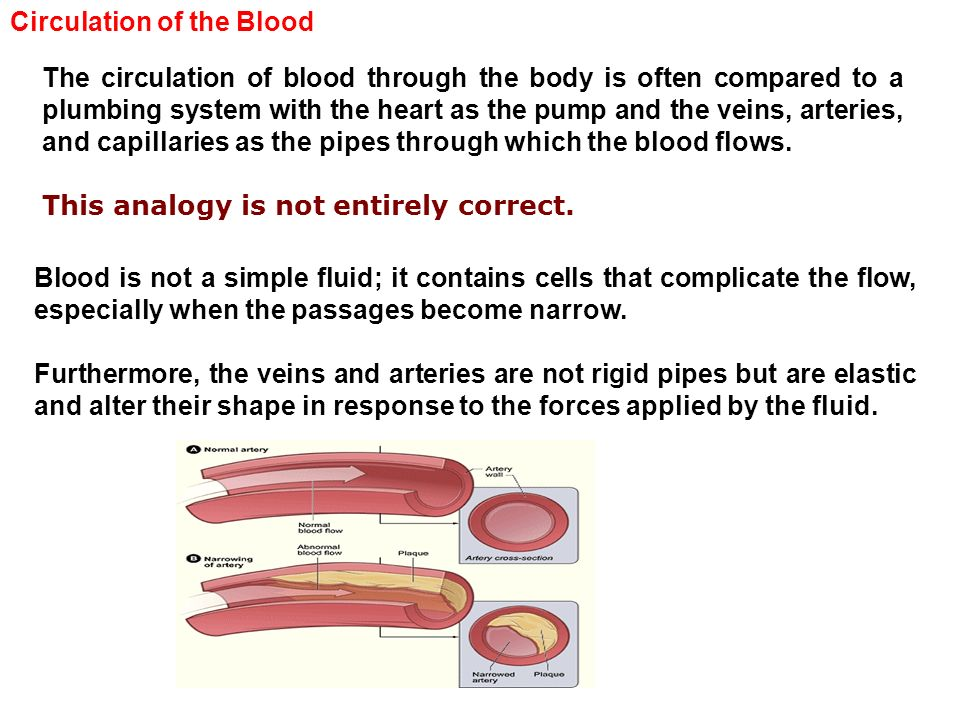 Circulation of the Blood The circulation of blood through the body is often compared to a plumbing system with the heart as the pump and the veins, ar