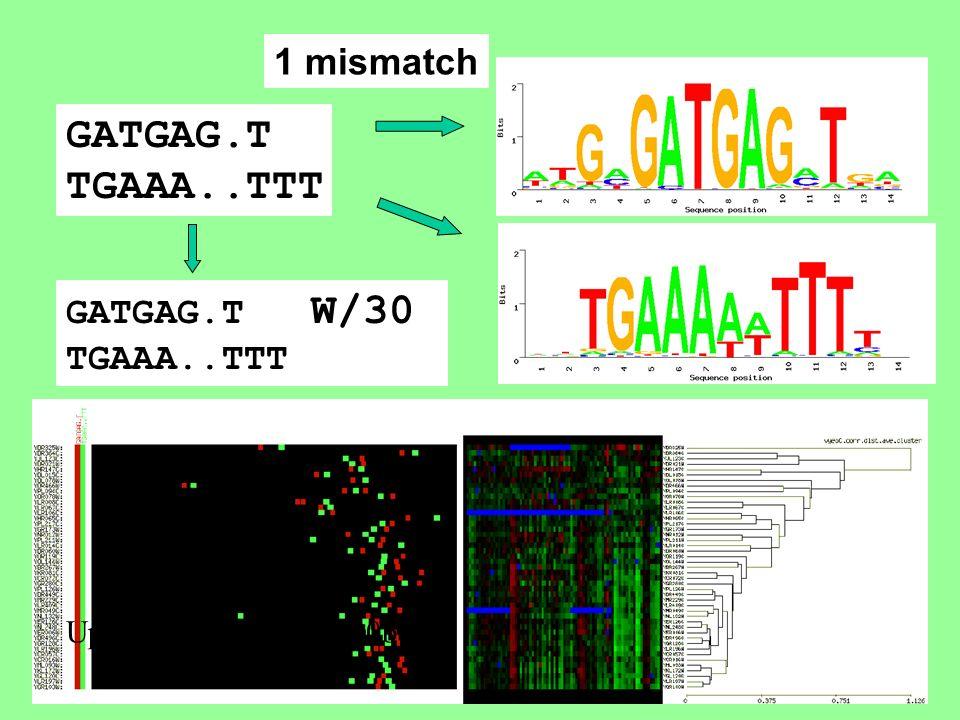 Upstream sequence (600bp) GATGAG.T TGAAA..TTT GATGAG.T W/30 TGAAA..TTT 1 mismatch