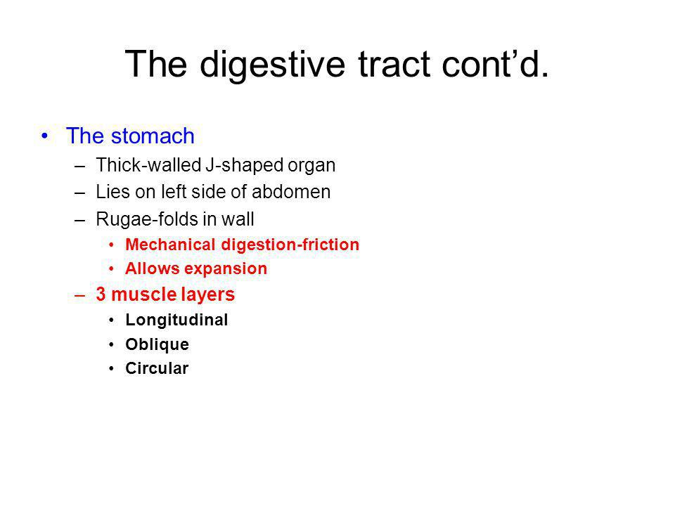 The digestive tract contd. The stomach –Thick-walled J-shaped organ –Lies on left side of abdomen –Rugae-folds in wall Mechanical digestion-friction A
