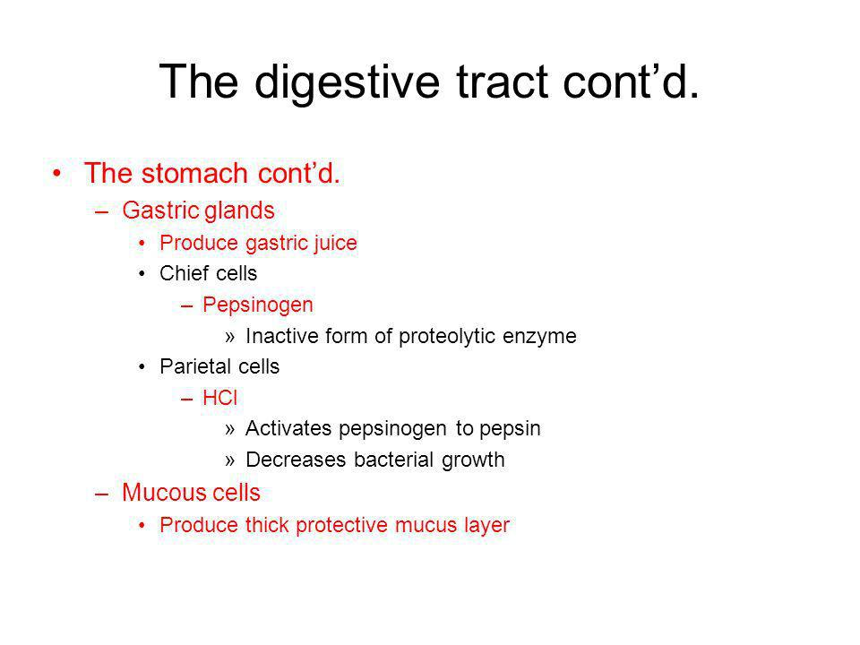 The digestive tract contd. The stomach contd. –Gastric glands Produce gastric juice Chief cells –Pepsinogen »Inactive form of proteolytic enzyme Parie