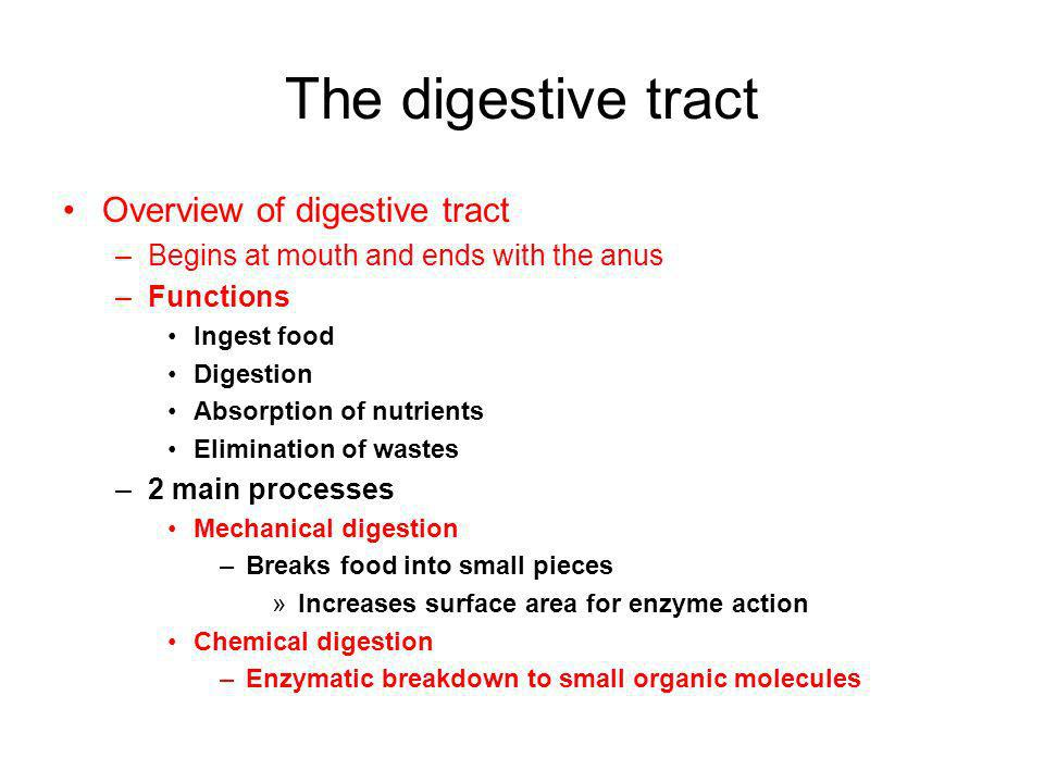 The digestive tract Overview of digestive tract –Begins at mouth and ends with the anus –Functions Ingest food Digestion Absorption of nutrients Elimi
