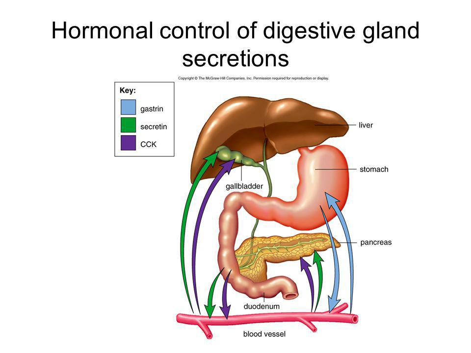 Hormonal control of digestive gland secretions