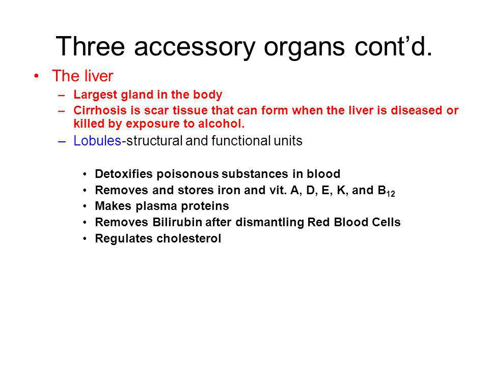 Three accessory organs contd. The liver –Largest gland in the body –Cirrhosis is scar tissue that can form when the liver is diseased or killed by exp