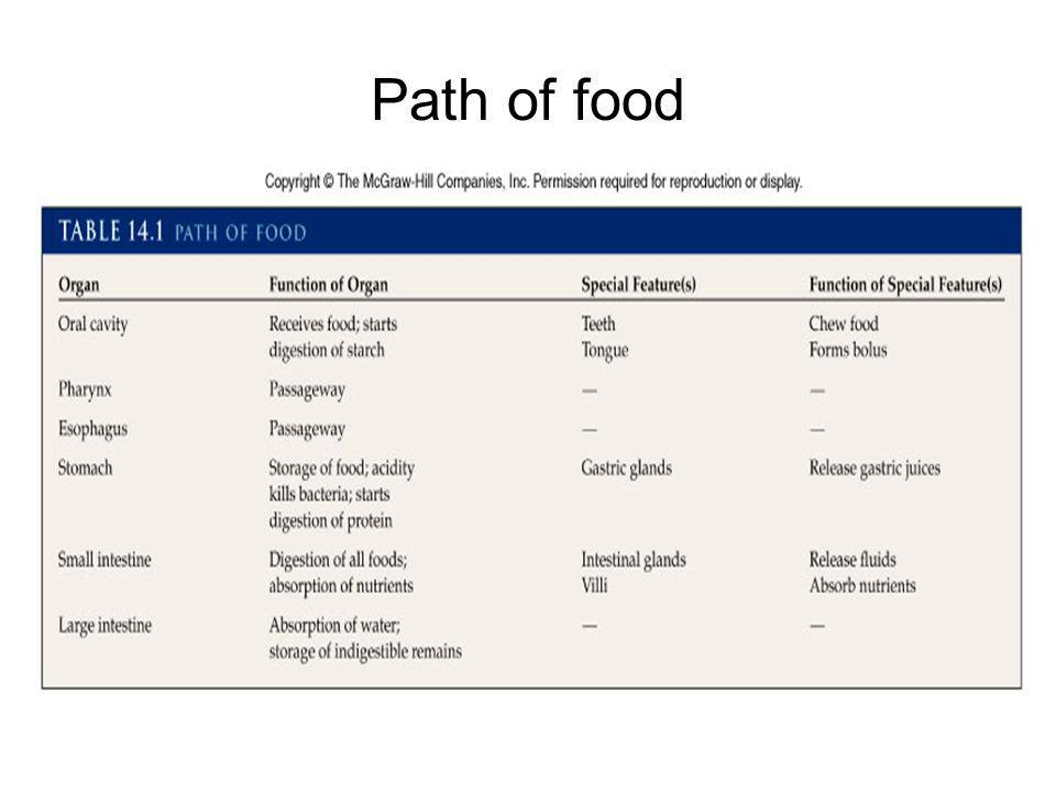 Path of food