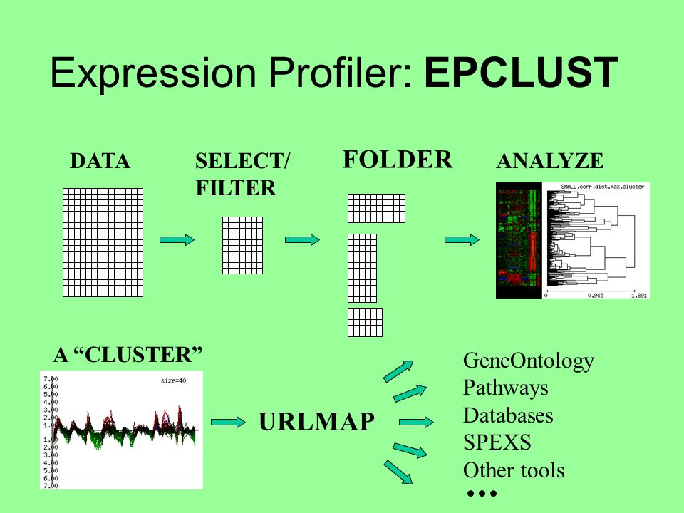 Expression Profiler: EPCLUST DATASELECT/ FILTER FOLDER ANALYZE A CLUSTER URLMAP GeneOntology Pathways Databases SPEXS Other tools