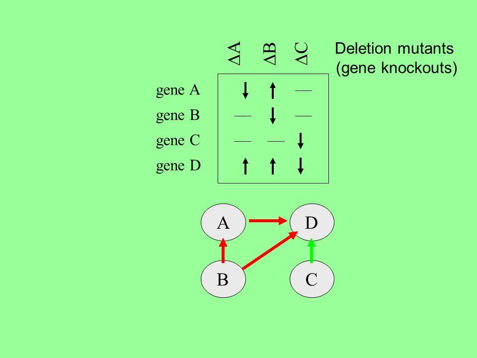A B C gene B gene C gene D gene A AD BC Deletion mutants (gene knockouts)
