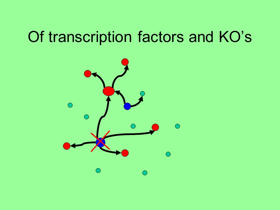 Of transcription factors and KOs