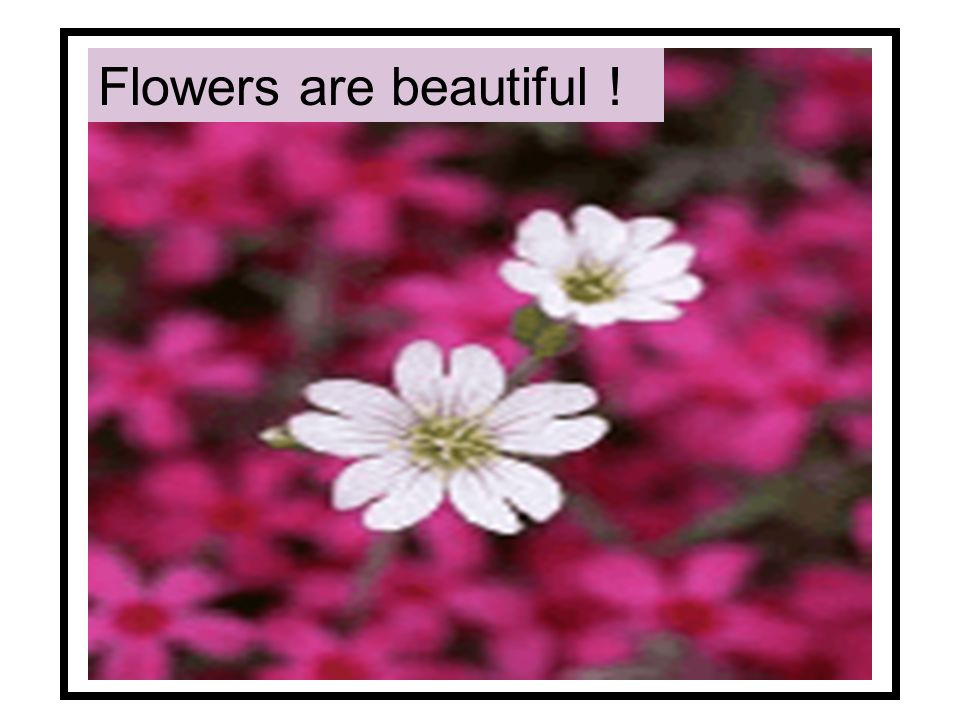 Flowers are beautiful !