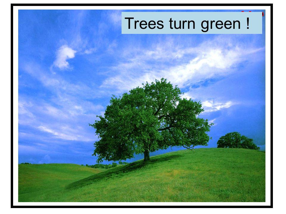 Trees turn green !