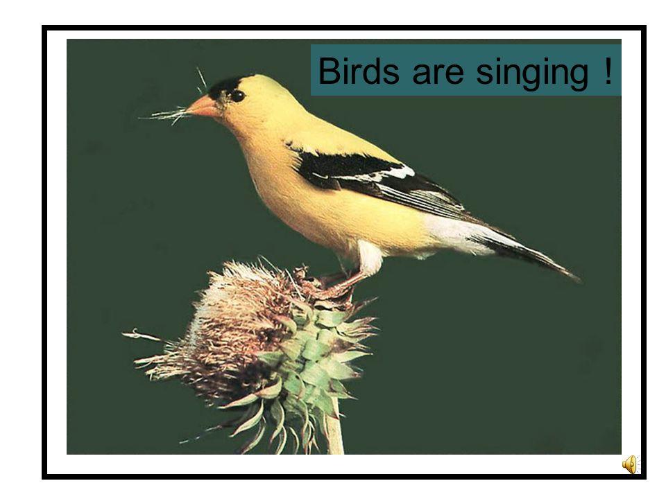 Birds are singing !